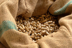 Closeup groundnuts seed Royalty Free Stock Photo