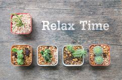 Closeup group of cactus in plastic white and brown pot on wood desk textured background in top view with relax time word. Closeup group of cactus in plastic royalty free stock photos