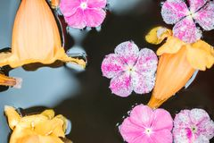 Closeup group of fallen pink and yellow flower float on water in basin for decoration in the garden textured background. Closeup group of fallen pink and yellow Royalty Free Stock Photography