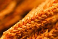 Closeup of group orange dry grass on white background. Close up of group orange dry grass on white background Royalty Free Stock Photos
