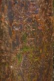 Gumbo Limbo Tree Bark Background. Closeup of a Gumbo Limbo tree bark for background Royalty Free Stock Photography