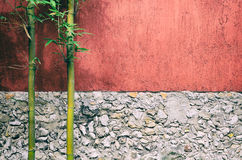 Closeup of half red half gray stone wall and two bamboo Royalty Free Stock Photo