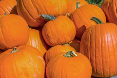 Closeup of Halloween Pumpkins Royalty Free Stock Photo