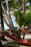 Closeup of Hammock chillout relax Tied to Coconut Royalty Free Stock Image