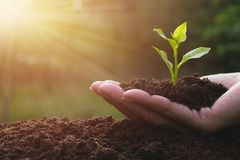 Closeup hand of person holding abundance soil for agriculture or Stock Photos