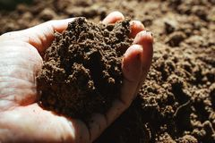 Closeup hand of person holding abundance soil for agriculture or. Planting peach concept royalty free stock photography