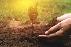 Closeup hand of person holding abundance soil for agriculture or Stock Images