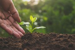 Closeup hand of person holding abundance soil for agriculture or Stock Photography