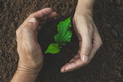 Closeup hand of person holding abundance soil for agriculture or Royalty Free Stock Images