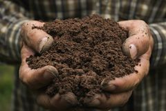 Closeup hand of person holding abundance soil for agriculture or. Planting peach royalty free stock images