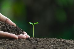 Closeup hand of person holding abundance soil for agriculture or planting peach.  royalty free stock photography