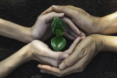Closeup hand of person holding abundance soil for agriculture or planting peach.  stock images