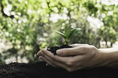 Closeup hand of person holding abundance soil for agriculture or planting peach.  stock photos