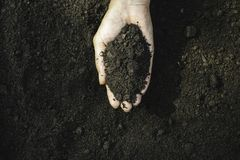Closeup hand of person holding abundance soil for agriculture or planting peach.  royalty free stock image