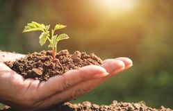 Closeup hand of person holding abundance soil with young plant i. N hand for agriculture or planting peach nature concept stock photography