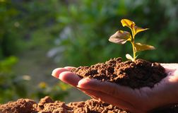 Closeup hand of person holding abundance soil with young plant i. N hand for agriculture or planting peach nature concept stock photos
