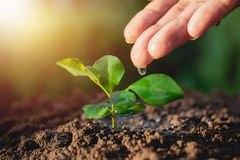 Closeup hand of person holding abundance soil with young plant i. N hand for agriculture or planting peach nature concept royalty free stock image