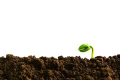Closeup hand of person holding abundance soil with young plant i Royalty Free Stock Images