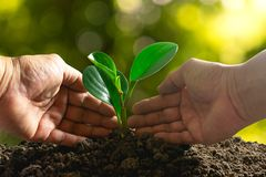 Closeup hand of person holding abundance soil with young plant i. N hand and watering for agriculture or planting peach nature concept royalty free stock photography