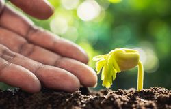 Closeup hand of person holding abundance soil with young plant i. N hand for agriculture or planting peach nature concept stock images