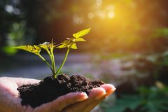 Closeup hand of person holding abundance soil with young plant i. N hand for agriculture or planting peach nature concept royalty free stock images