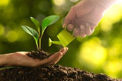 Closeup hand of person holding abundance soil with young plant i. N hand and watering for agriculture or planting peach nature concept stock image