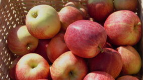 Closeup of a hand putting a ripe red apple. In wicker basket stock footage