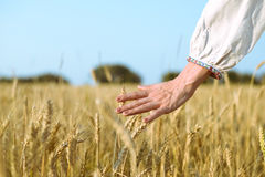 Closeup of hand in rustic dress protecting golden Royalty Free Stock Photos
