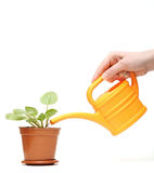 Closeup hand watering a plant with watering can Royalty Free Stock Photography