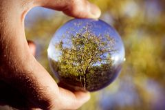 Tree in a crystal ball. Closeup of the hand of a young caucasian man outdoors holding a crystal ball where it is reflected a tree royalty free stock images