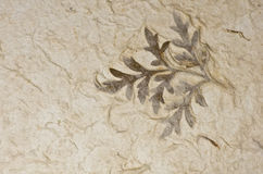 Closeup of handmade paper texture background with leaf Stock Photography