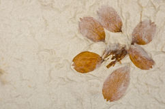 Closeup of handmade paper texture background with petals Royalty Free Stock Image