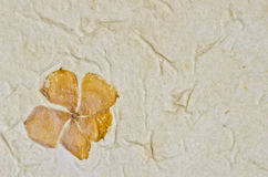 Closeup of handmade paper texture background with petals Royalty Free Stock Images
