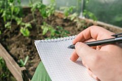 Closeup hands of greenhouse worker taking notes in seedlings in nursery Stock Images