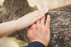 Closeup of hands newlyweds. Hands of the newlyweds with wedding rings Stock Image