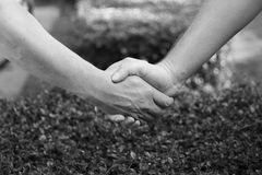 Closeup of handshake with nature background Stock Photography