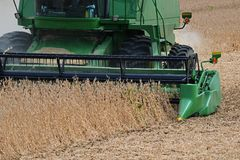 Closeup harvesting soybeans Royalty Free Stock Image