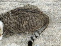 Haunch, bottom of cat on cement floor. Closeup haunch, bottom of cat on rough cement floor stock photography