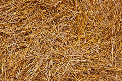 Closeup of hay background Royalty Free Stock Images