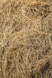 Closeup of hay bale Royalty Free Stock Image