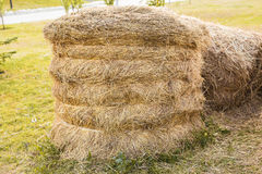 Closeup hay bales on the field after harvest Stock Image