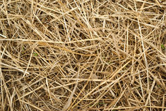 Closeup of a haystack Stock Images