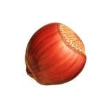 Closeup of hazelnut isolated on white background Royalty Free Stock Photos