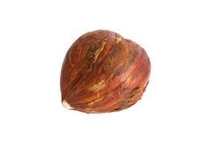Closeup of a hazelnut peanut Royalty Free Stock Photos