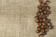 Closeup hazelnuts on burlap Stock Image