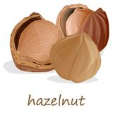 Closeup of hazelnuts, isolated on the white background. Illustration collection Stock Images