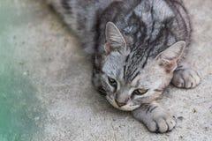 Closeup a head of cat Stock Images