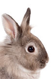Portrait of a bunny rabbit Stock Photo