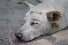 Closeup a head sleeping dog Stock Photo