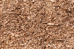 Closeup of a heap of woodchips from shredded trees Royalty Free Stock Image